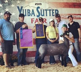 Chad Walker Livestock Co : Lambs